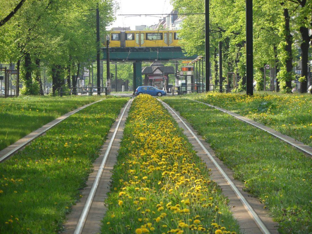 Üppiges Rasengleis Wisbyer Straße
